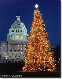 The annual Christmas tree on the White House Lawn