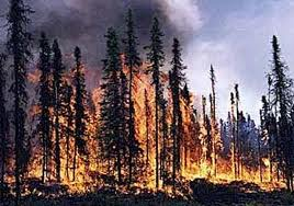 Fire is a natural part of the regeneration cycle