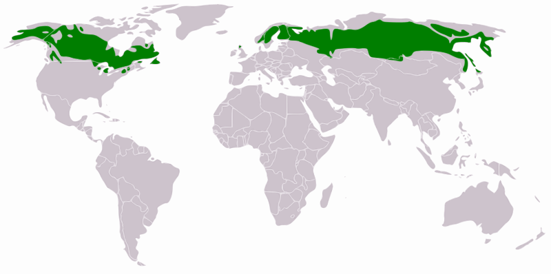 Distribution of the Boreal Forest (Wikipedia)