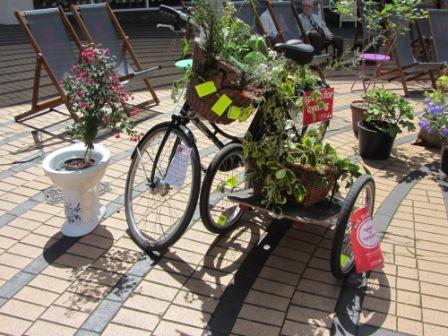 IMG_4602 loo and bike compressed