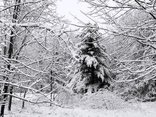wild tree in cold weather, winter