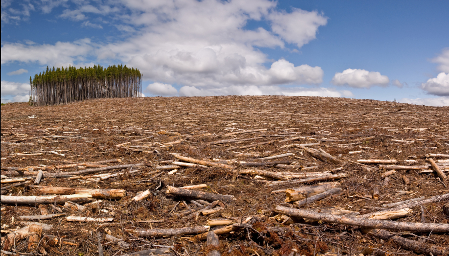 We are losing 10 billion trees per year (net)
